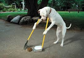 dog cleaning up mess